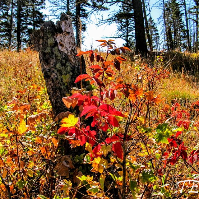Autumn colors in Montana.
